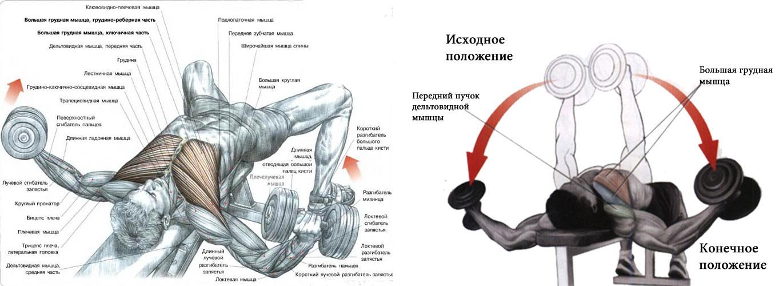 Упражнение на грудные мышцы в домашних условиях для мужчин