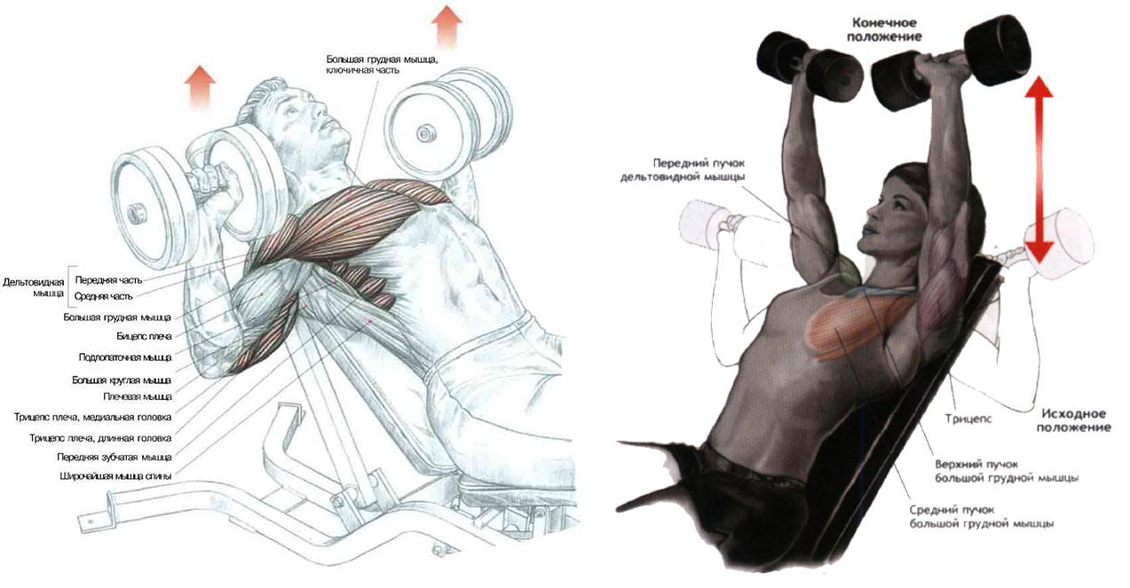 Как правильно качать груди с